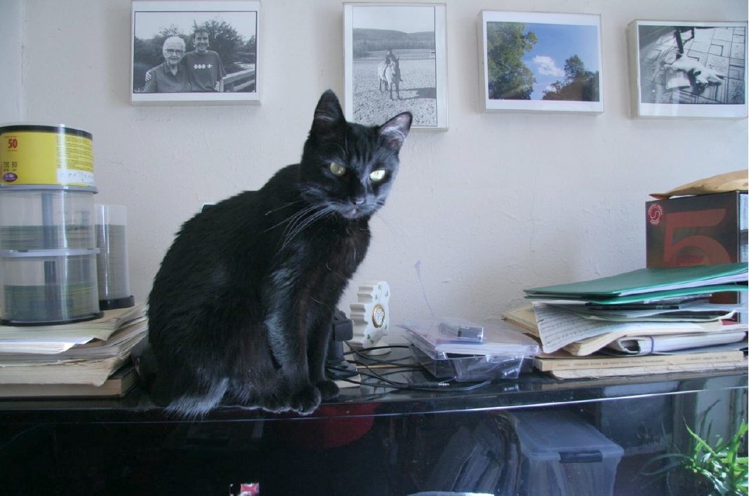Photo credit: Ellen Mandel; Kitty companions should be left at home.